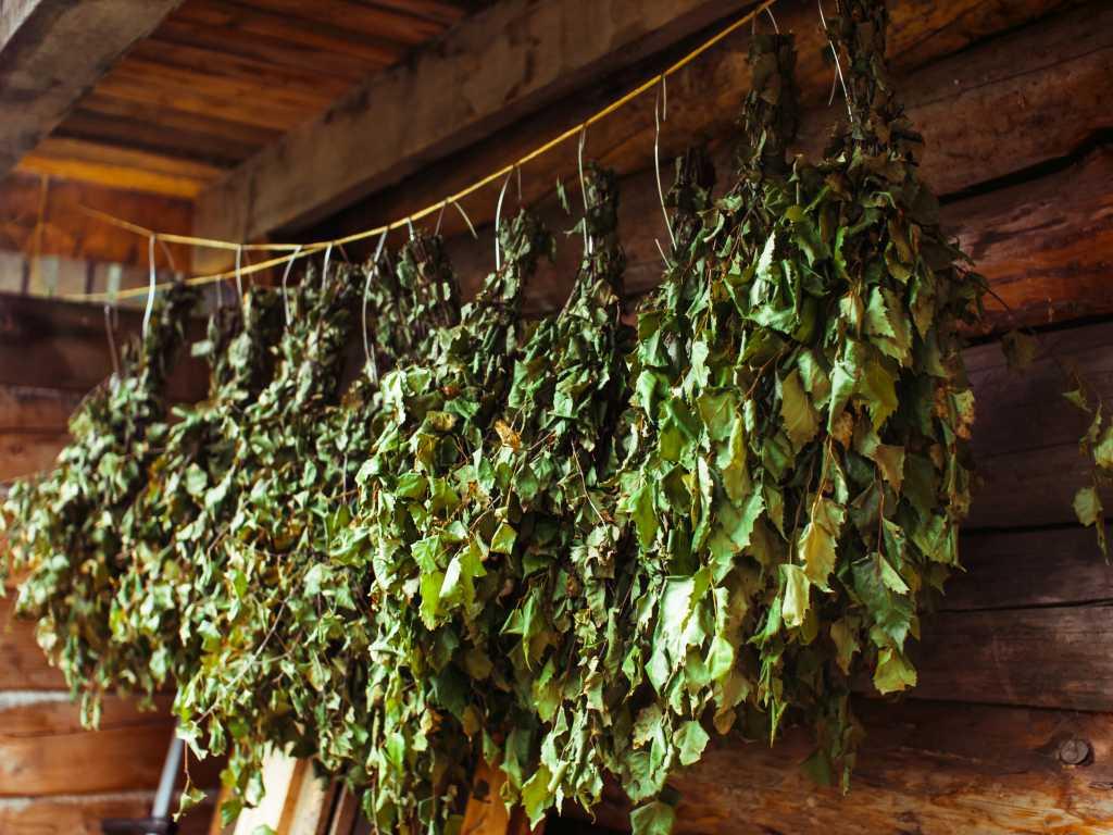 suszenie witek brzozowych